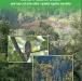 सामुदायिक वनमा जैविक विविधता अध्ययन